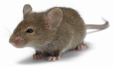 mouse-007