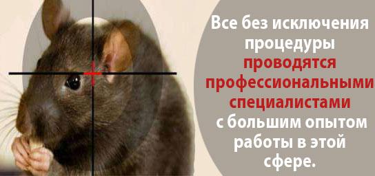 Уничтожение крыс в Москве