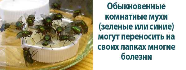 Уничтожение мух
