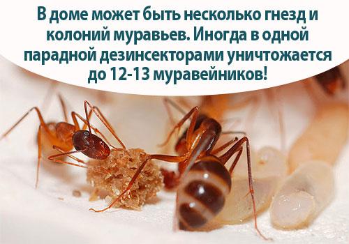 обработка квартиры от паразитов