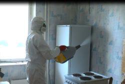 Клопы в квартире, как избавиться: обратиться в disinfection-eko.ru