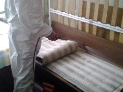 Провести дезинфекцию, от которой исчезнут постельные клопы, в disinfection-eko.ru
