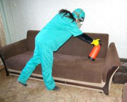 Как вывести клопов – обратиться в disinfection-eko.ru
