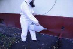 Обработка помещений от клопов – заказать в disinfection-eko.ru