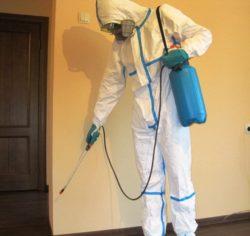 Что делать, если дома клопы? Обратиться в disinfection-eko.ru