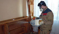 disinfection-eko.ru – Вам расскажут, что делать, если завелись клопы