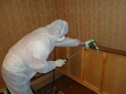Уничтожение клопов в квартире – обращайтесь в disinfection-eko.ru