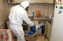 Служба по уничтожению клопов – вся информация в disinfection-eko.ru