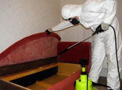 Клопы постельные, средства для уничтожения недорого в магазине disinfection-eko.ru