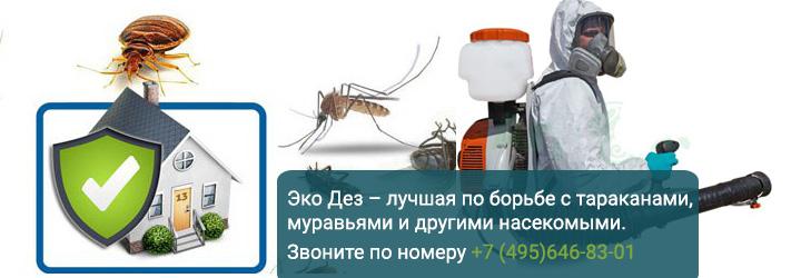 Уничтожение тараканов муравьев