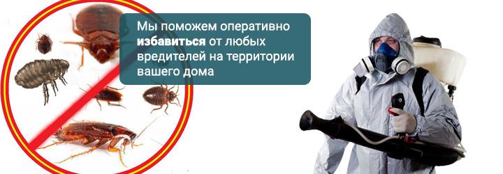 Уничтожение муравьев и блох