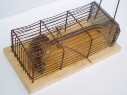 Самая эффективная борьба с крысами на территории всей Москвы недорого и качественно