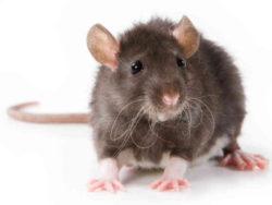 Борьба с летучими мышами на территории всей Москвы недорого и качественно