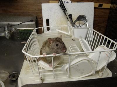 Закажите у нас средство борьбы с мышами на даче