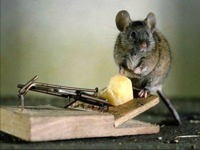 Закажите у нас средства борьбы с крысами в доме